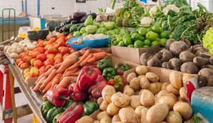 Todo sobre las verduras
