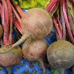 remolacha, raíz con forma de bola, roja, con hojas grandes verdes